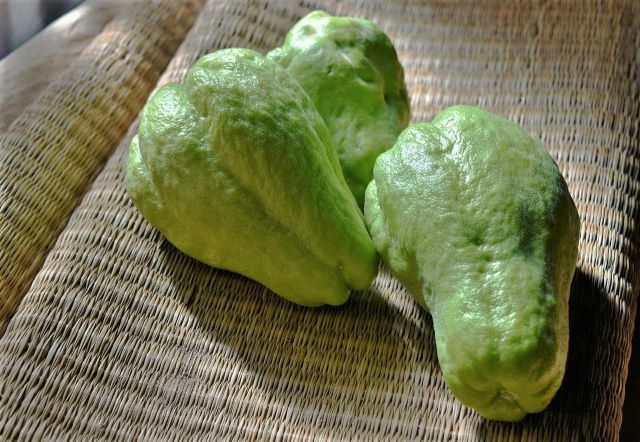 How to Grow Chayote Squash Choko