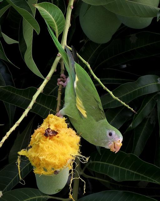 How to Grow a Mango Tree - Mango Tree Pests