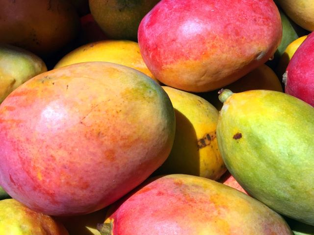 How to Grow a Mango Tree - Mangoes